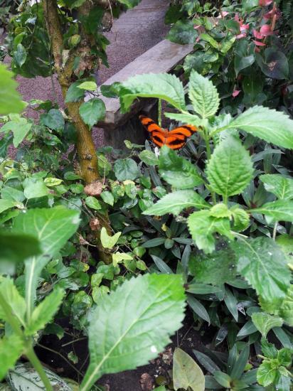 Honfleur la serre tropicale 5